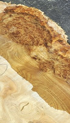 A8769-A8780 English Wych Elm Burly Slabs ~ Hearne Hardwoods Inc.