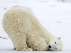 Yoga....downward bear