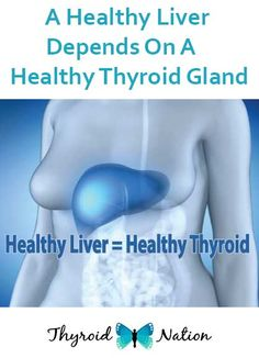 A Healthy Liver Depends On A Healthy Thyroid Gland – Diabetes Remedies Thyroid Gland, Thyroid Disease, Thyroid Health, Health Benefits, Health Tips, Women's Health, Normal Body Temperature, Healthy Liver, Natural Remedies