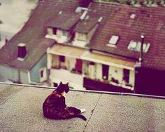 Cat on a...roof