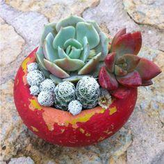 Tiny Palm Size Red Clay Pot   Succulen/Cactus