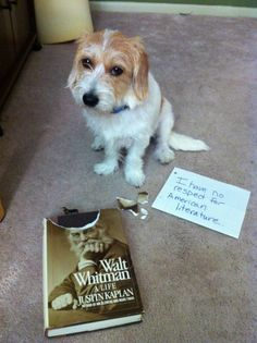 Dog Shaming--I have no respect for American literature.