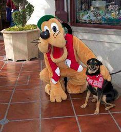 cachorros-em-posições-engraçadas-24