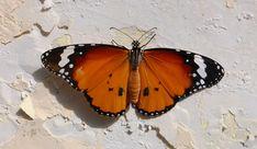 Sag doch mal »Schmetterling« statt »Scheiße«