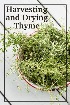 Harvesting and Drying Thyme. Growing and drying thyme is so easy, there is no need to buy expensive little jars at the grocery store! Thyme Uses, Preserve Fresh Herbs, Thyme Plant, Thyme Recipes, Dried Lemon, Pots, Thyme Growing, Preserved Lemons, Gardens