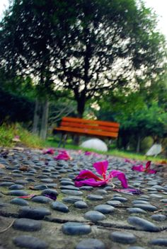 Fallen flowers lay strewn all over the footpaths.