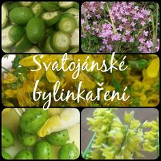 BYLINKY SBÍRANÉ O SVATOJÁNSKÉ NOCI …… Všechny bylinkářky, čarodějky a… Sprouts, Health Fitness, Gardening, Vegetables, Plants, Diet, Lawn And Garden, Vegetable Recipes, Plant