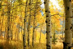 reminds me of childhood days Amazing Photos, Cool Photos, Fall Paint Colors, Birches, Childhood Days, Fall For You, Fall Harvest, Milky Way