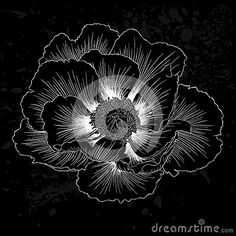 beautiful-monochrome-black-white-plant-paeonia-arborea-tree-peony-flower-isolated-greeting-cards-invitations-68442976.jpg (400×400)