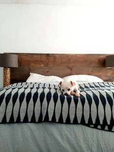 """DIY """"weathered"""" wood headboard. yeah, i mostly think the puppy is super cute! but the head board with some more diy color would be awesome too!"""