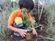 バリの森を守ろう! 日本人とバリ人による森林復元活動、今年も始まる