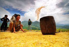 grow more food Visit Vietnam, Vietnam Travel, Hanoi, Street Photography, Monument Valley, Farmer, Beautiful Pictures, Scenery, Island