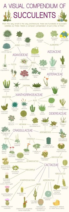 A Visual Compendium of Succulents Infographic., I've needed this for a very long time! Plants and cactus. Succulent Gardening, Cacti And Succulents, Planting Succulents, Container Gardening, Gardening Tips, Planting Flowers, Indoor Gardening, Cactus Planters, Organic Gardening
