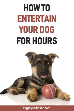 Here's our top 10 best toys to entertain your dog for hours. Relieve dog boredom and keep your dog busy with challenging toys that give him more mental stimulation. Diy Dog Toys, Best Dog Toys, Best Dogs, German Shepherd Pictures, German Shepherd Puppies, German Shepherds, Online Pet Supplies, Dog Supplies, Dog Boredom