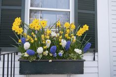 Landscape Ideas for a Small Front Yard   Hunker