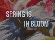 Spring is in Bloom  - Cover Art