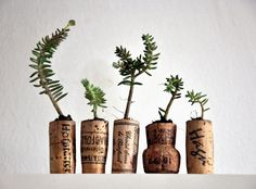 Korken - Pflanztöpfchen / Corks as flower pots / Upcycling