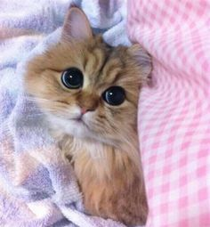 This little kitten is too cute. - credit to: swipurr.com