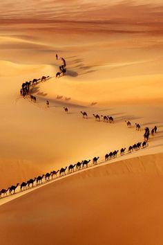 Camel train, on the border of Saudi Arabia and UAE border of Saudi Arabia and UAE
