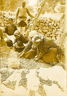 Ramallah-رام الله: RAMALLAH - Villagers from Ramallah area  gathering olives from the ground, early 20th c.