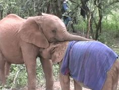 These love bugs. | 22 Photos That Prove Elephants Make The World A Better Place