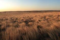 42 Grassland Pano Left