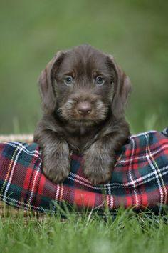 Cute! . . .have always loved plaids, tartans, etc . . . then add a cute puppy . . .ahhhhhhhh