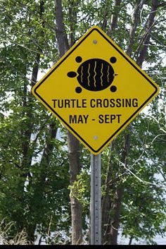 Photo of funny road signs for fans of Random 28184038 Funny Street Signs, Funny Road Signs, Cool Pictures, Funny Pictures, Signs Of Life, Camping Signs, Directional Signs, Sign I, Hilarious