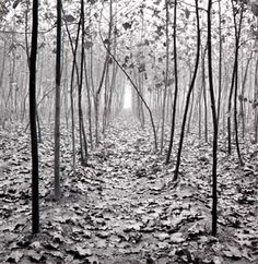 John Sexton  Forest in Mist, Xiían, China, 1984