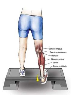6 Exercises to Stretch Your Toes, Ankles, Soleus and Gastrocnemius Muscles - The Health Science Journal Calf Stretches, Muscle Stretches, Stretching, Stretch Calf Muscles, Arthritis, Peroneus Longus, Soleus Muscle, Gastrocnemius Muscle, Physical Therapy