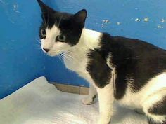 Manhattan NY.  Mimi.  Female.  3 yrs.  Dies in a.m.  See Pets on Death Row- Urgent Death on fb.***RESCUED***