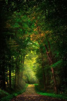 Early Mist, Pennsylvania, USA by Emmanuel Panagiotakis What a wonderful place for a relaxing walk!