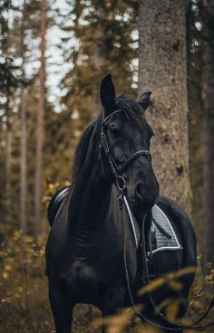 'Black Stallion' iPhone Case by PictureEyes Cute Horses, Pretty Horses, Horse Love, Black Horses, Wild Horses, Black Stallion Horse, Andalusian Horse, Horse Photos, Horse Pictures
