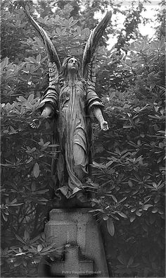 Friedhof Ohlsdorf Más