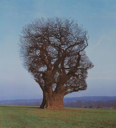 Tree Of Half Life Silkscreen Print by Storm Thorgerson