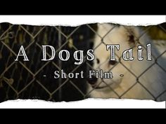 My Puppy Pearl - A Short Film / Life of L-J