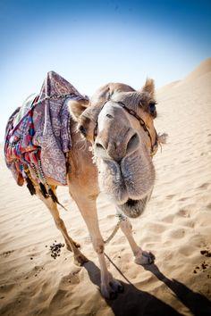 All Inclusive Desert safari Dubai Tour Packages with Skyland tourism Abu Dhabi, Resorts, Desert Safari Dubai, Dubai Tour, Dubai City, Bur Dubai, Dubai Hotel, Visit Dubai, Dubai Travel
