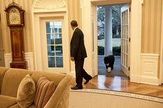 President Barack Obama looks back as Bo, the Obama family dog, follows him into the Oval Office, Jan. 27, 2012.