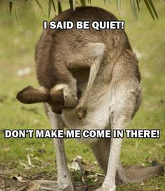 Amazing Creatures: 30 Funny animal captions - part 13 (30 pics)