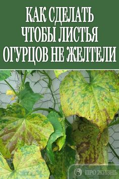 #дача #огурцы #не #желтели Gardening Tips, Food Photography, Food Porn, Places To Visit, Healthy Eating, Herbs, Lunch, Healthy Recipes, Homemade