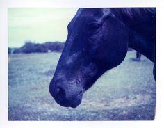 'roid week - black horse by Jeremy Klapprodt, via Flickr
