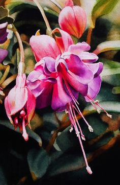 Fuchsia, painting by artist Jacqueline Gnott