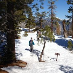 There's an absolute gem of a hike in Yosemite National Park that anyone who loves a good winter snowshoe hike should do.    It's a seven-mile out-and-back trek from Badger Pass to the inspirational Dewey Point, which is on the south rim at just over 7,000 feet elevation. It's hard to find a more ...