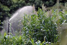 Honduras: Periodo de lluvias inicia oficialmente del 6 al 10 de mayo  El año pasado se perdió el 90% de las cosechas en los departamentos del corredor seco del país por la falta de precipitaciones. El corredor seco fue el más afectado con la falta de precipitaciones el año pasado. Se construyeron sistemas de riego.