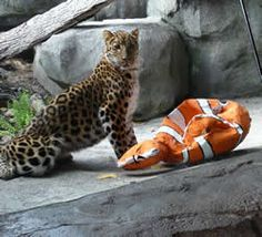wild animal enrichment images | Check out our wish list on Amazon.com