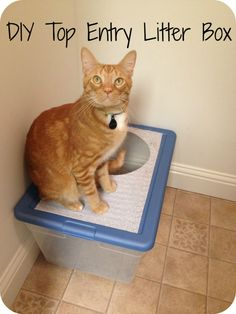 DIY top entry litter box from a plastic storage box. Less litter tracking. Yay