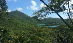 My ten favorite things to do in the Virgin Islands; Hike the Reef Bay Trail