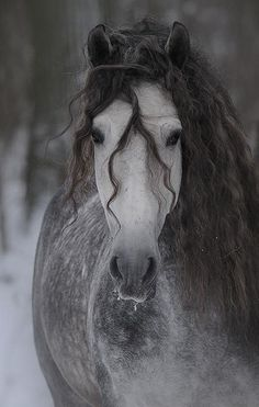 such a beautiful horse, one day maybe I will own horses, they are so beautiful