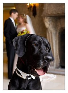 One Groom, One Bride and a…..Great Dane | Chelsea The Dane's Weblog