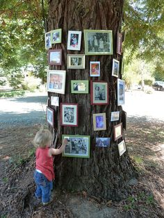 Family and friend pictures on trees for a family reunion - might be better than hanging them ... especially for windy areas